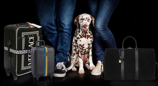 melbourne-pet-photographer-brisbane-pet-photography-pet-friendly-acccommodation-travel-with-your-pets