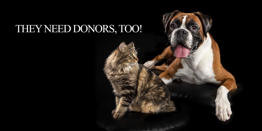 canine-feline-donors-blood-need-melbourne-pet-photographer-studio-pet-photography