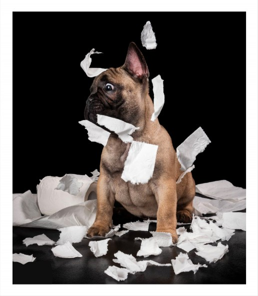 ZOO_RESOURCES 2nd section_dog and tissues