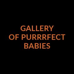 https://www.zoostudio.com.au/wp-content/uploads/2021/07/gallery-of-purrfect-babies.png